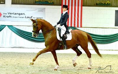 31. Herbstauktion - Turnier und Training der Auktionspferde