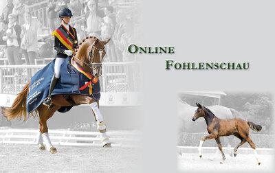 Online-Fohlenschau
