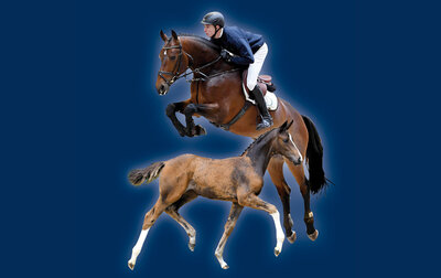 31. Herbstauktion - Training der Auktionspferde